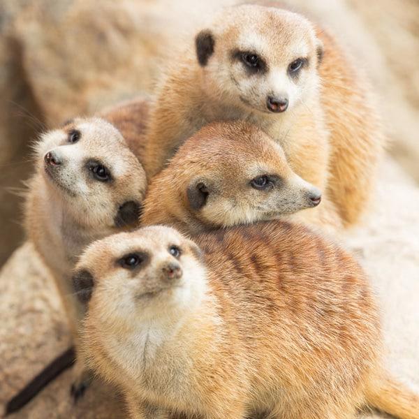Cleveland – Cleveland Zoological Society's ZippityZooDoo 2014