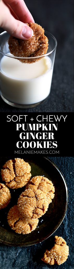 These eight ingredient Soft and Chewy Pumpkin Ginger Cookies are perfect any time of year but are destined to be an autumn cookie all-star. Pumpkin, molasses, cinnamon and ginger bring the warmth and expected fall flavors to these pillowy cookies. #pumpkin #ginger #cookies #autumn #fallrecipes #easydesserts